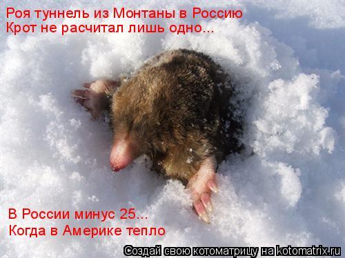 Котоматрица: Роя туннель из Монтаны в Россию Крот не расчитал лишь одно... В России минус 25... Когда в Америке тепло