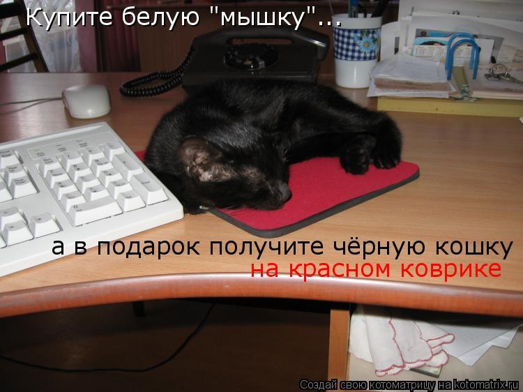 """Котоматрица: Купите белую """"мышку""""... а в подарок получите чёрную кошку на красном коврике"""