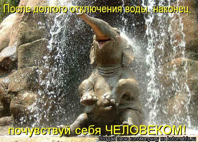 Котоматрица: После долгого отключения воды, наконец,  почувствуй себя ЧЕЛОВЕКОМ!