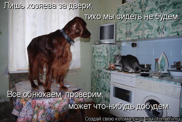 Котоматрица: Лишь хозяева за двери, тихо мы сидеть не будем. Все обнюхаем, проверим, может что-нибудь добудем.