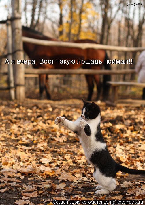 Котоматрица: А я вчера  Воот такую лошадь поймал!!