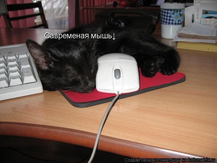 Котоматрица: Савременая мышь↓