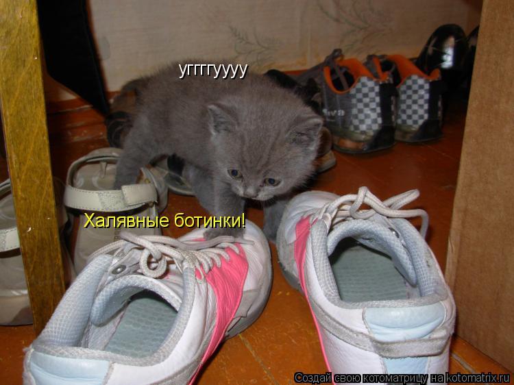 Котоматрица: уггггуууу Халявные ботинки!