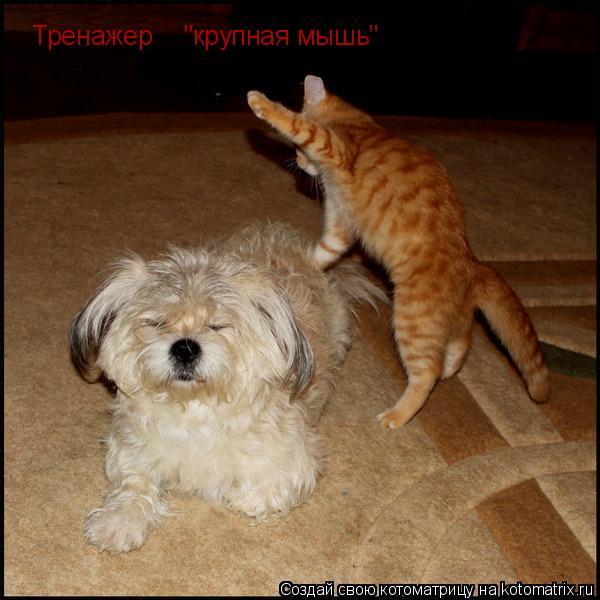 """Котоматрица: Тренажер """"крупная мышь"""""""