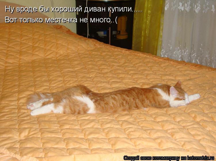 Котоматрица: Ну вроде бы хороший диван купили..... Вот только местечка не много..(