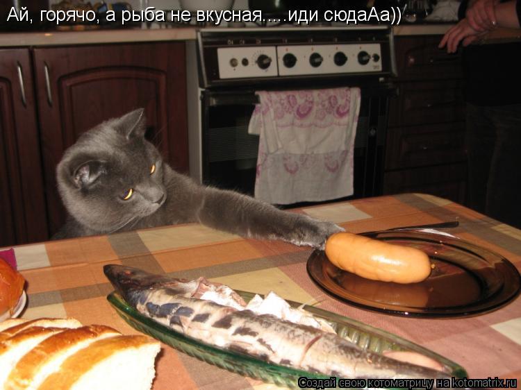 Котоматрица: Ай, горячо, а рыба не вкусная.....иди сюдаАа))