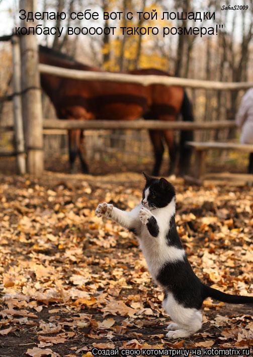 """Котоматрица: Зделаю себе вот с той лошадки колбасу вооооот такого розмера!"""""""