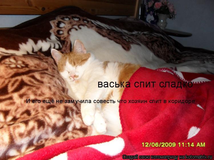 Котоматрица: васька спит сладко И его ещё не замучила совесть что хозяин спит в коридоре