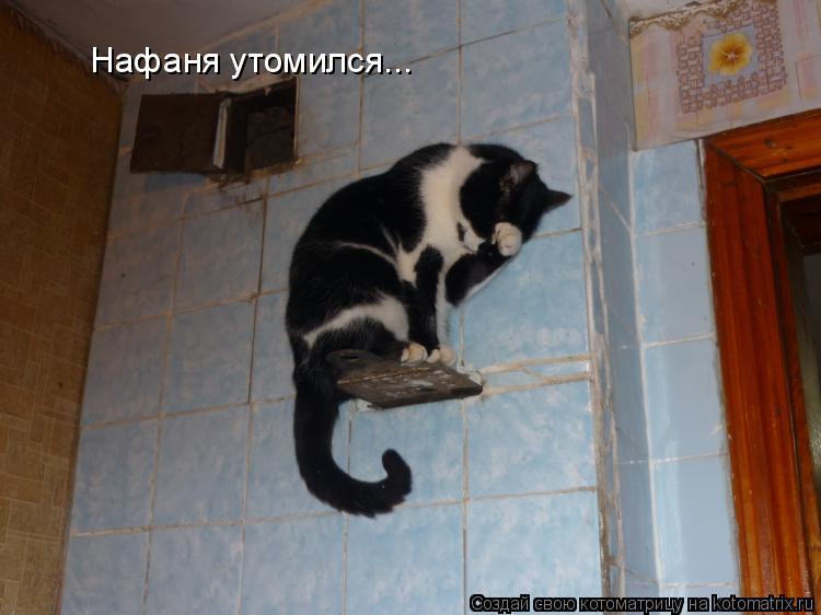 Котоматрица: Нафаня утомился...