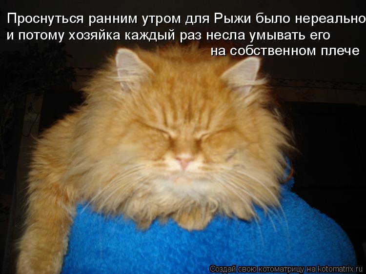 Котоматрица: Проснуться ранним утром для Рыжи было нереально и потому хозяйка каждый раз несла умывать его на собственном плече