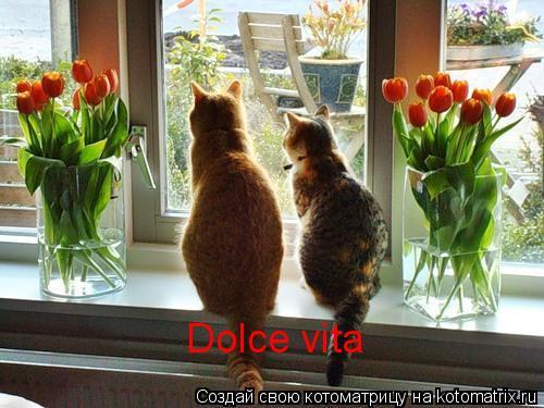 Котоматрица: Dolce vita