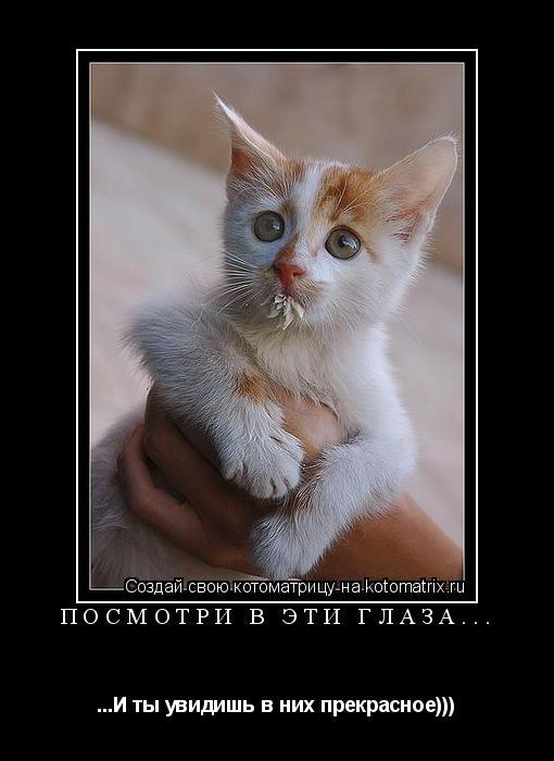 Котоматрица: Посмотри в эти глаза... ...И ты увидишь в них прекрасное)))