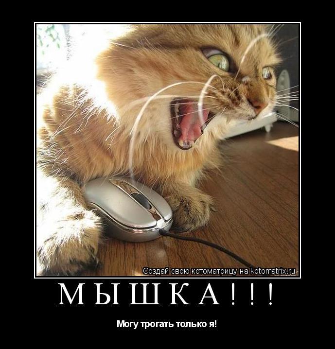 Котоматрица: Мышка!!! Могу трогать только я!