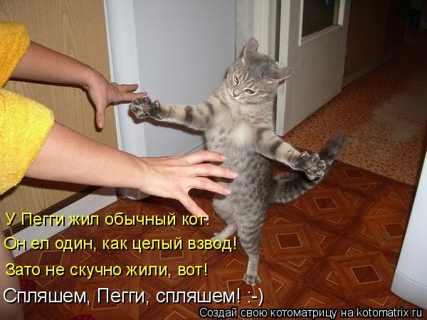 Котоматрица: У Пегги жил обычный кот: Он ел один, как целый взвод! Зато не скучно жили, вот! Спляшем, Пегги, спляшем! :-)