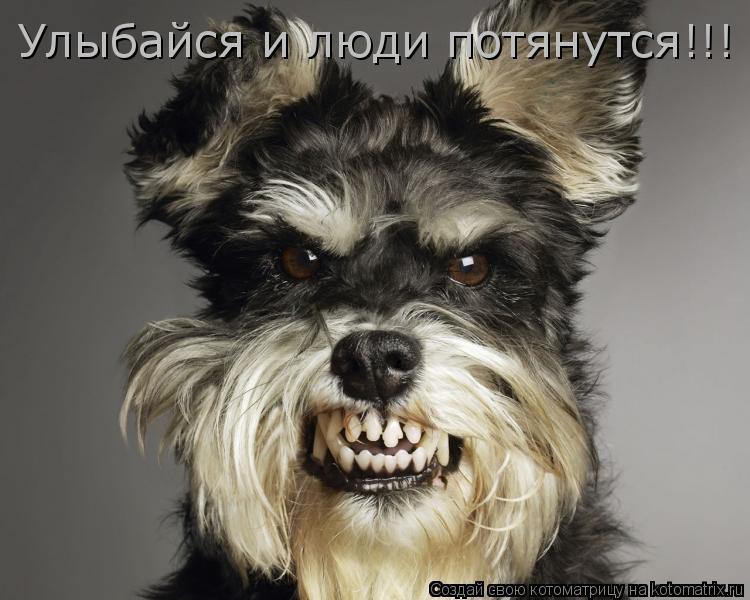 Котоматрица: Улыбайся и люди потянутся!!!