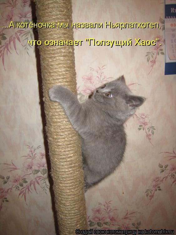 """Котоматрица: ...А котёночка мы назвали Ньярлатхотеп, что означает """"Ползущий Хаос""""."""