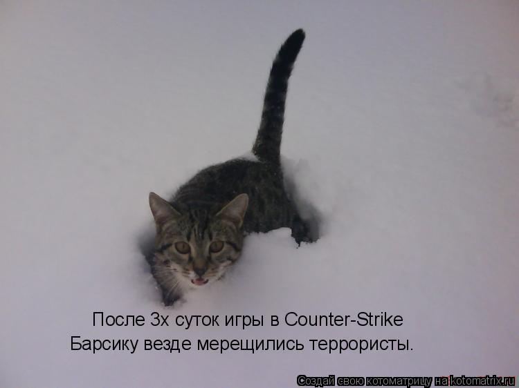 Котоматрица: После 3х суток игры в Counter-Strike Барсику везде мерещились террористы.