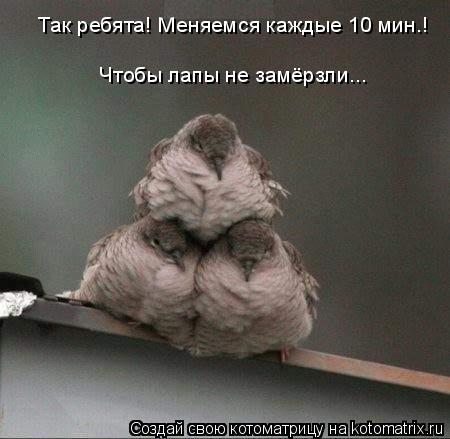 Котоматрица: Так ребята! Меняемся каждые 10 мин.! Чтобы лапы не замёрзли...