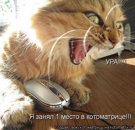 Котоматрица: УРА!!!! Я занял 1 место в котоматрице!!!