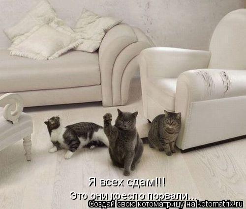 Котоматрица: Я всех сдам!!! Это они кресло порвали...