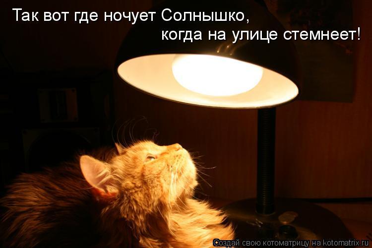 Котоматрица: Так вот где ночует Солнышко,  когда на улице стемнеет!