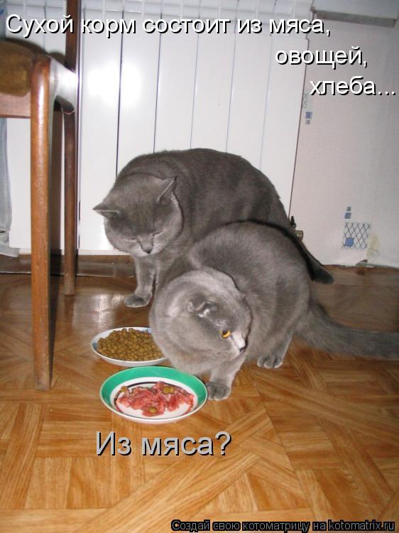 Котоматрица: Сухой корм состоит из мяса,  овощей, хлеба... Из мяса?