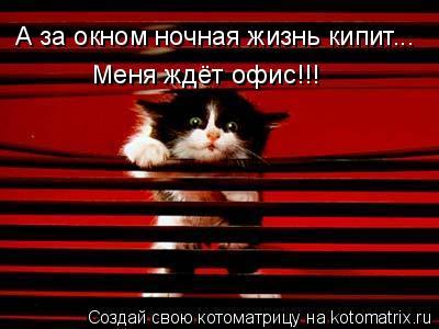 Котоматрица: А за окном ночная жизнь кипит... Меня ждёт офис!!!
