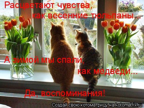 Котоматрица: Расцветают чувства, как весенние тюльпаны... А зимой мы спали, как медведи... Да, воспоминания!
