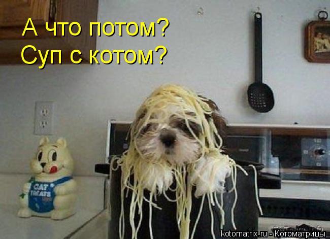 Котоматрица: А что потом? Суп с котом?