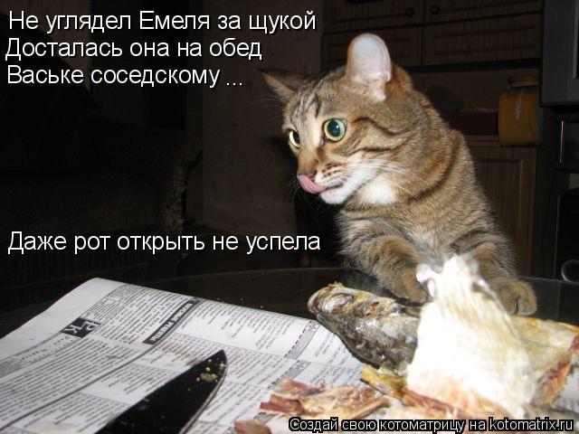 Котоматрица: Не углядел Емеля за щукой Досталась она на обед Ваське соседскому ... Даже рот открыть не успела