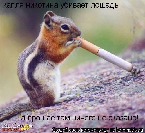 Котоматрица: капля никотина убивает лошадь, а про нас там ничего не сказано!