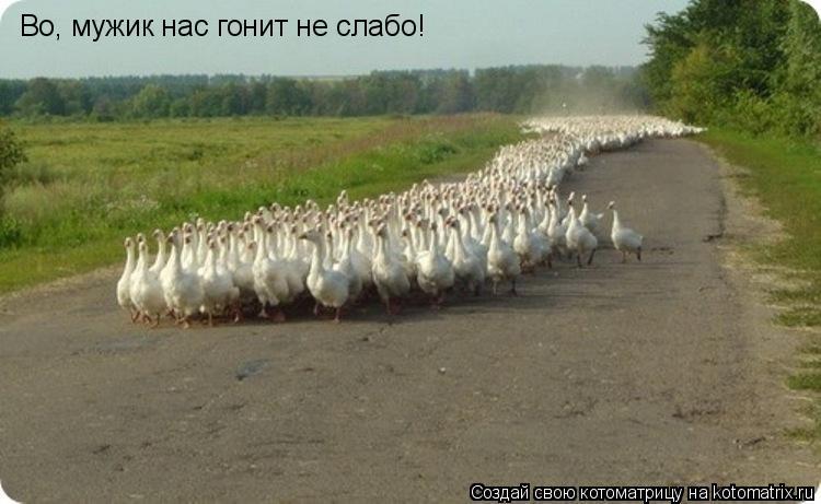 Котоматрица: Во, мужик нас гонит не слабо!