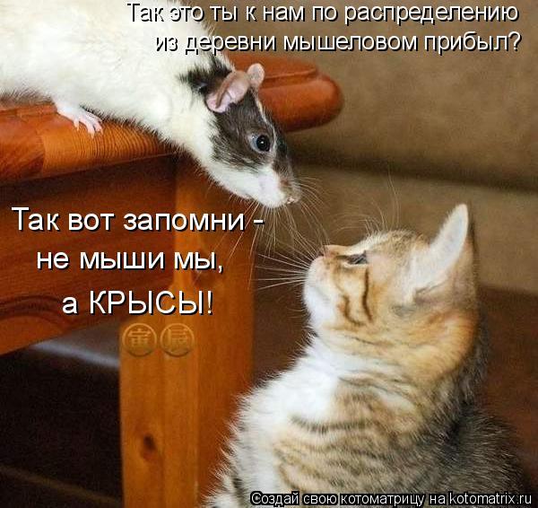 Котоматрица: Так это ты к нам по распределению  из деревни мышеловом прибыл? Так вот запомни -  не мыши мы,  а КРЫСЫ!