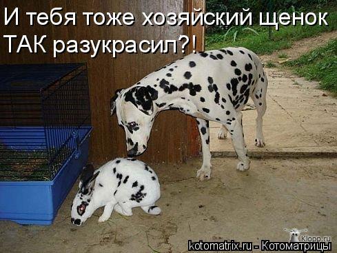 Котоматрица: И тебя тоже хозяйский щенок ТАК разукрасил?!