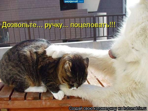 Котоматрица: Дозвольте... ручку... поцеловать!!!