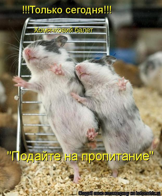 """Котоматрица: Хомячковий балет !!!Только сегодня!!! """"Подайте на пропитание"""""""