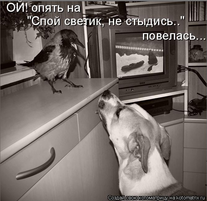 """Котоматрица: ОЙ! опять на  """"Спой светик, не стыдись..""""   повелась..."""
