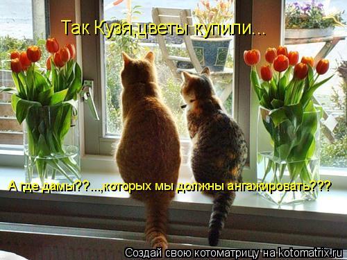 Котоматрица: Так Кузя,цветы купили... А где дамы??...,которых мы должны ангажировать???