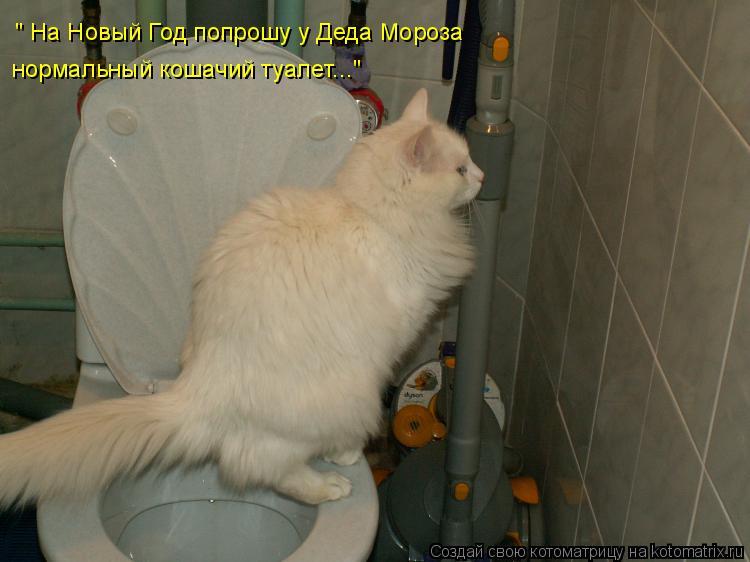 """Котоматрица: """" На Новый Год попрошу у Деда Мороза  нормальный кошачий туалет..."""""""