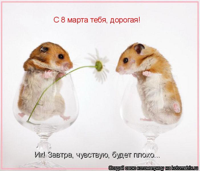 Котоматрица: С 8 марта тебя, дорогая! С 8 марта тебя, дорогая! Ик! Завтра, чувствую, будет плохо...