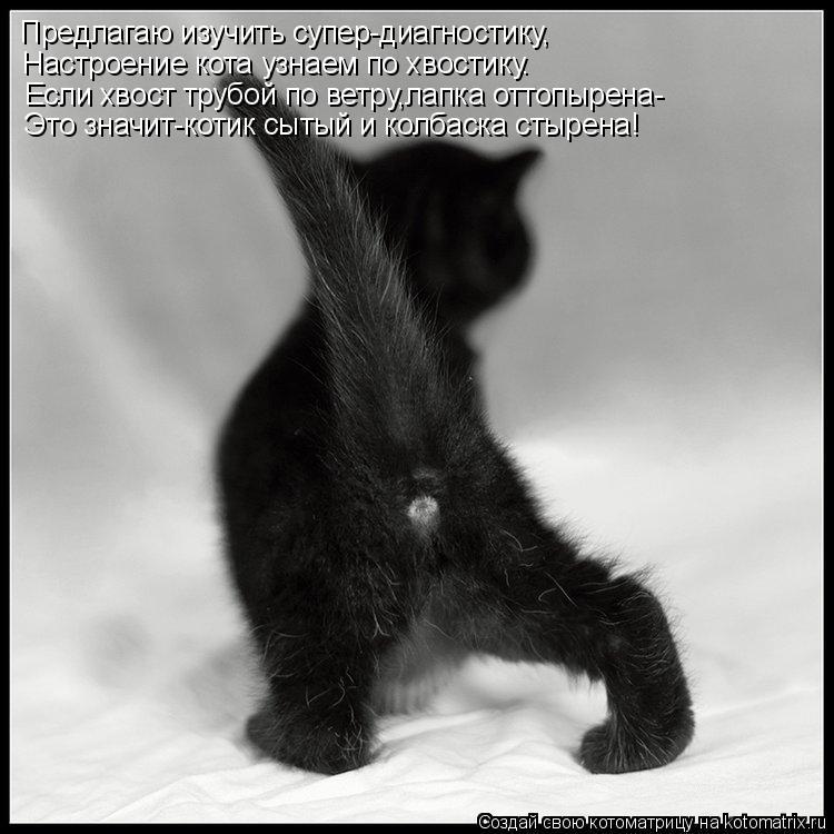 Котоматрица: Предлагаю изучить супер-диагностику, Настроение кота узнаем по хвостику. Если хвост трубой по ветру,лапка оттопырена- Это значит-котик сыт