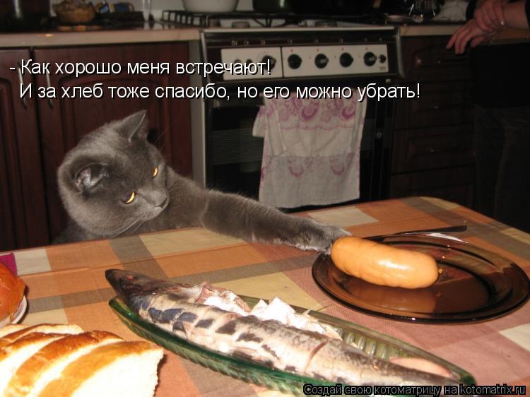Котоматрица: - Как хорошо меня встречают! И за хлеб тоже спасибо, но его можно убрать!
