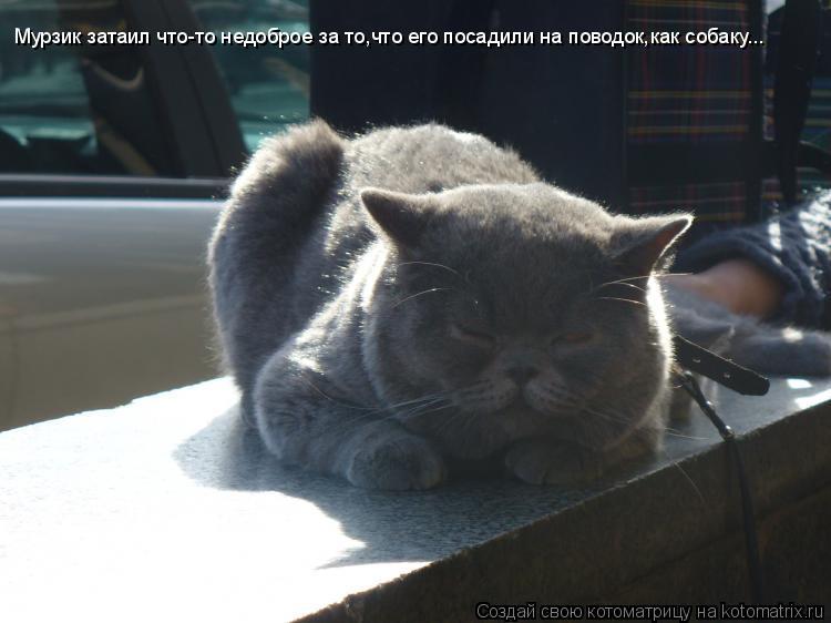 Котоматрица: Мурзик затаил что-то недоброе за то,что его посадили на поводок,как собаку...