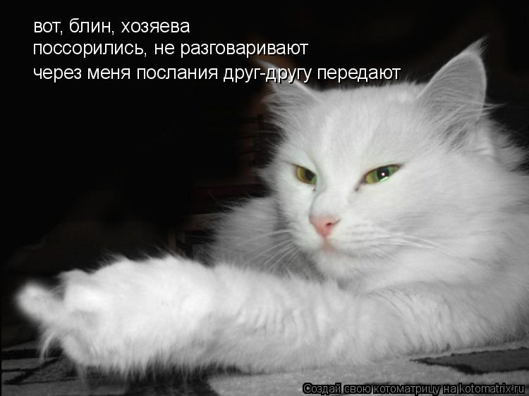 Котоматрица: вот, блин, хозяева поссорились, не разговаривают через меня послания друг-другу передают