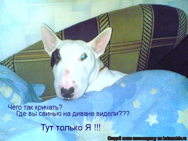 Котоматрица: Чего так кричать? Где вы свинью на диване видели??? Тут только Я !!!
