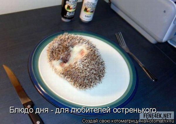Котоматрица: Блюдо дня - для любителей остренького.
