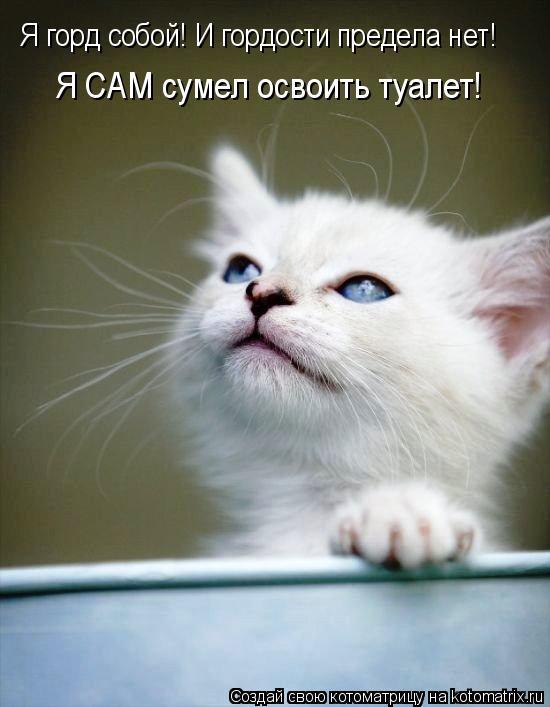 Котоматрица: Я горд собой! И гордости предела нет!  Я САМ сумел освоить туалет!