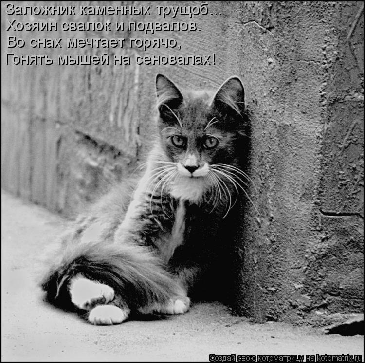 Котоматрица: Заложник каменных трущоб... Хозяин свалок и подвалов. Во снах мечтает горячо, Гонять мышей на сеновалах!