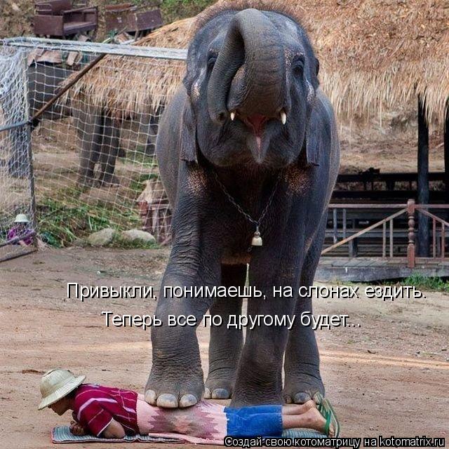 Котоматрица: Привыкли, понимаешь, на слонах ездить. Теперь все по другому будет...