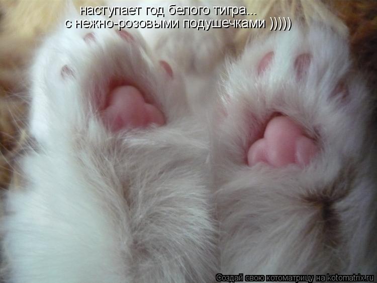 Котоматрица: наступает год белого тигра... с нежно-розовыми подушечками )))))